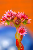 Colorful pink flowers in spring Royalty Free Stock Images