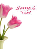 Colorful Pink Tulips In A Green Vase Stock Images