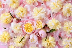 Colorful pink and yellow flowers background Stock Image