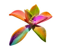 Colorful plant Stock Photos