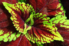 Colorful plant leaves Stock Images