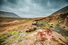 Colorful plants in arid volcanic terrain in Lanzarote. Colorful plants in arid volcanic terrain in mountains in Lanzarote, Spain Royalty Free Stock Image