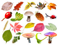 Colorful plants and berries collection background Royalty Free Stock Photos