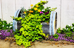 Colorful Plants In Cut Out Wine Barrel. Colorful Flowers In Cut Out Wine Barrel stock photo