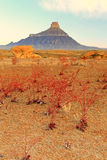 Colorful plants at Factory Butte. Stock Image