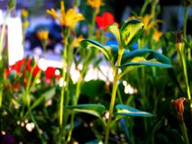 Spring Flowers sprouting. Close up on colorful plants and flowers in sunlight Stock Images