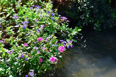 Colorful plants in the garden. Colorful  plants in the garden near the water Stock Images