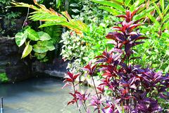 Colorful plants in the garden. Near the water Royalty Free Stock Photo
