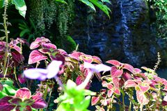 Colorful plants in the garden. Near the water Stock Images