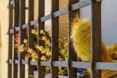 Colorful plants grow behind metal bars stock photo