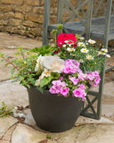 Colorful plants in a  pot. Stock Photography