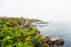 Colorful Plants on Rocky Coast.jpg Royalty Free Stock Image