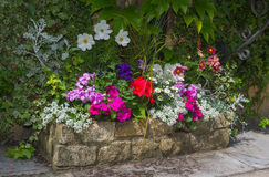 Colorful plants in stone trough. Stock Photography