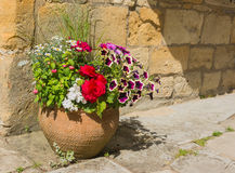 Colorful plants in a terracotta pot. Stock Photography