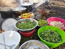 Field cooking- edible plants and vegetables in bowels and  puts on the fire. Colorful plastic Bowls with vegetables and edible plants near a bonfire with pans Royalty Free Stock Photos