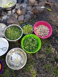 Field cooking- edible plants and vegetables in bowels and  puts on the fire. Colorful plastic Bowls with vegetables and edible plants near a bonfire with pans Stock Photo