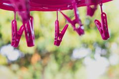 Pink plastic clothespins. royalty free stock images