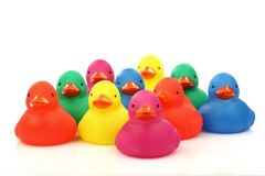 Colorful plastic ducklings Stock Photo