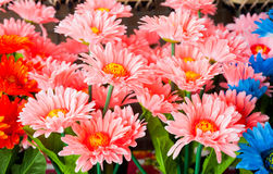 Colorful plastic flowers. Colorful plastic flowers  in the market Royalty Free Stock Photos