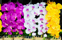Colorful plastic flowers. Colorful plastic flowers  in the market Stock Photography
