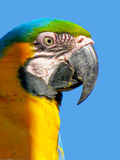 Colorful plumage of a Macaw Stock Photo
