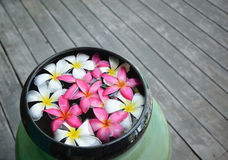 Colorful of plumeria. Flower floating in the bowl Stock Photography