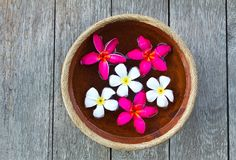 Colorful Plumeria flower Stock Images