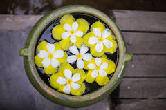 Colorful of Plumeria flower floating in the ancient bowl Royalty Free Stock Photography