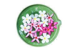 Colorful Plumeria flowers a ceramic basin Stock Photo