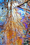 Colorful pond. A colorful pond with the reflection of a tree on it Royalty Free Stock Image