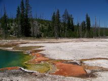 Pond in Yellowstone stock image