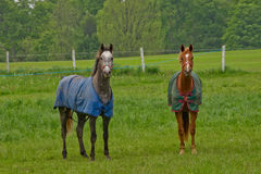 Colorful ponies in meadow Royalty Free Stock Photo