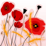 Colorful poppies and wheatear Royalty Free Stock Images