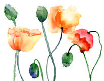 Colorful Poppy flowers Royalty Free Stock Photos