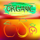 Colorful poster with painted organic fruits Royalty Free Stock Image
