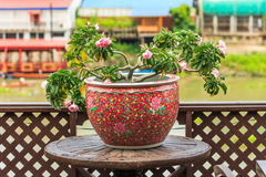 Colorful pot and pink Impala Lily or desert rose on wooden table Royalty Free Stock Photos