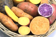 Colorful Potatoes. Many different varieties of potatoes, some halved - potato (Solanum tuberosum) and sweet potato (Ipomoea batatas Stock Photos
