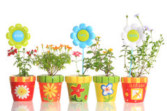 Colorful pots with pretty flowers Stock Photography