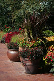 Colorful Potted Plants Royalty Free Stock Images