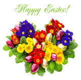 Colorful primula flowers, easter eggs Stock Image