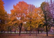 Colorful Public Park with Autumn Colors. Beautiful Autumn Nature stock photos
