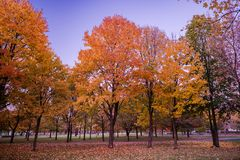 Colorful Public Park with Autumn Colors. Beautiful Autumn Nature royalty free stock image