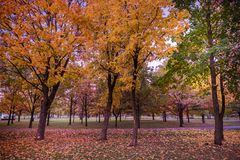 Colorful Public Park with Autumn Colors. Beautiful Autumn Nature royalty free stock photos