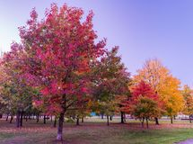 Colorful Public Park with Autumn Colors. Beautiful Autumn Nature royalty free stock images