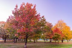 Colorful Public Park with Autumn Colors. Beautiful Autumn Nature royalty free stock photo