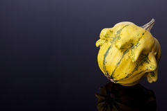 Colorful pumpkin Stock Photography