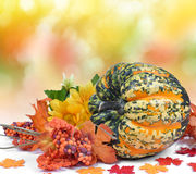 Colorful pumpkin Royalty Free Stock Image