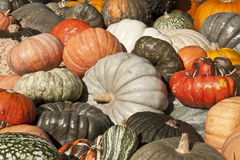 Colorful Pumpkin Harvest Royalty Free Stock Photos