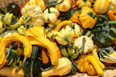 Colorful pumpkin and marrow Stock Photos