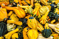 Colorful Pumpkin Squash Pile Royalty Free Stock Photography